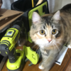 Medium abd51db7 3a75 4775 a580 a6b42a8b62e9