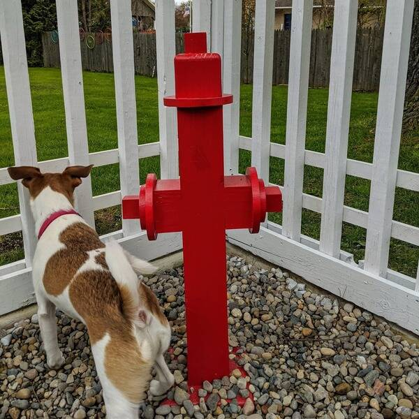 Photo: Dog Days DIY Fire Hydrant