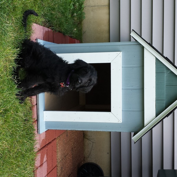 Photo: Ella's dog house