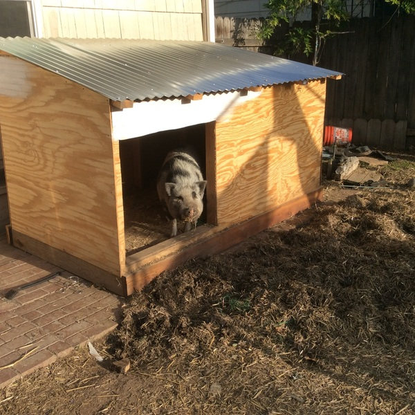 Photo: Pig House
