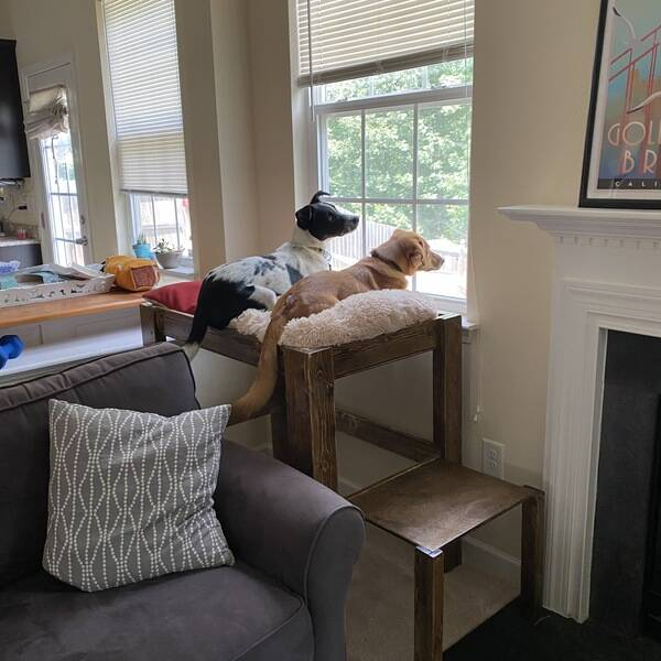 Photo: Elevated Dog Bed