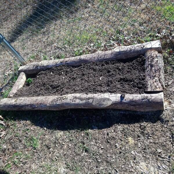 Photo: Raised bed from cut down tree