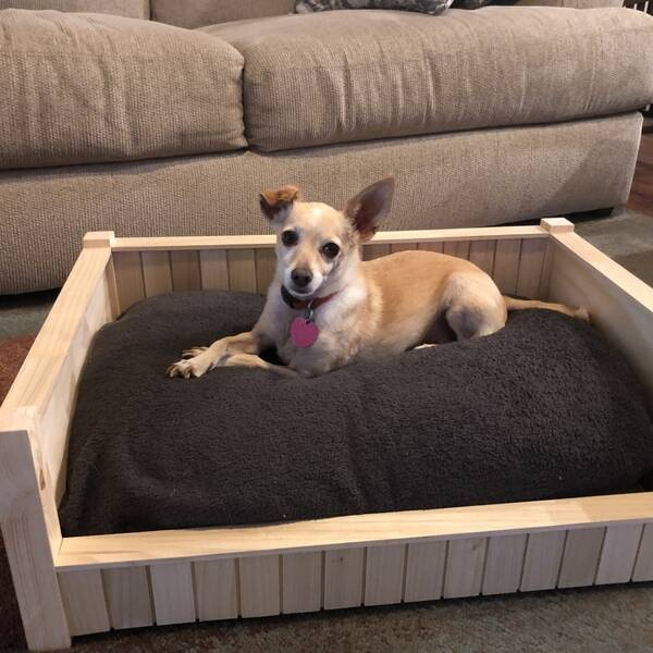 Photo: Dog Bed