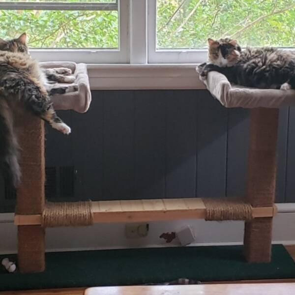 Photo: Double Cat Tower