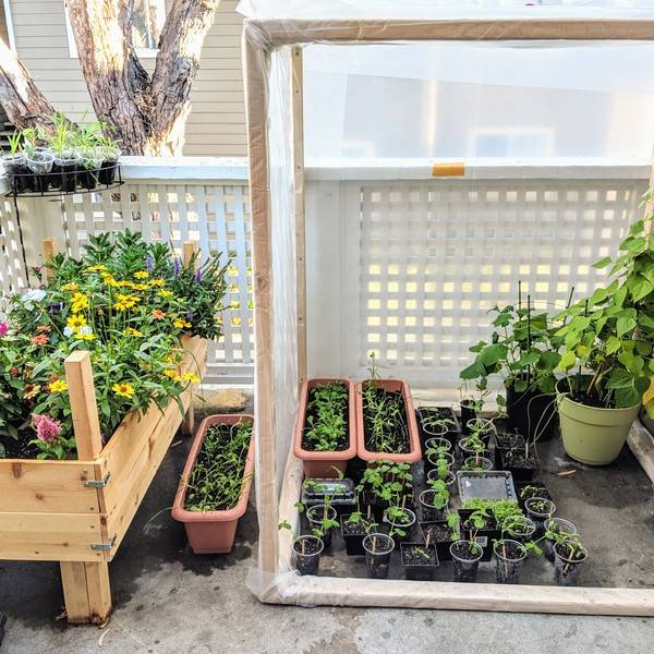 Photo: Greenhouse for 1st floor patio