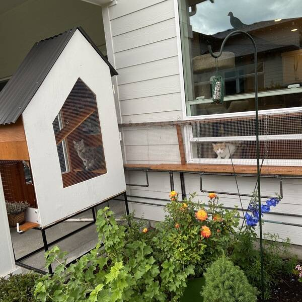 Photo: Gilly and Lillybell's Contemporary Catio